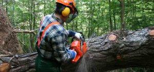 Worker using chainsaw while wearing ear, hand and face protection